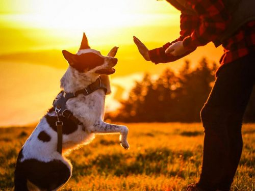 dog-high-five-jerky-sampler