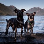Beef Jerky for Dogs: The Do's and Don'ts