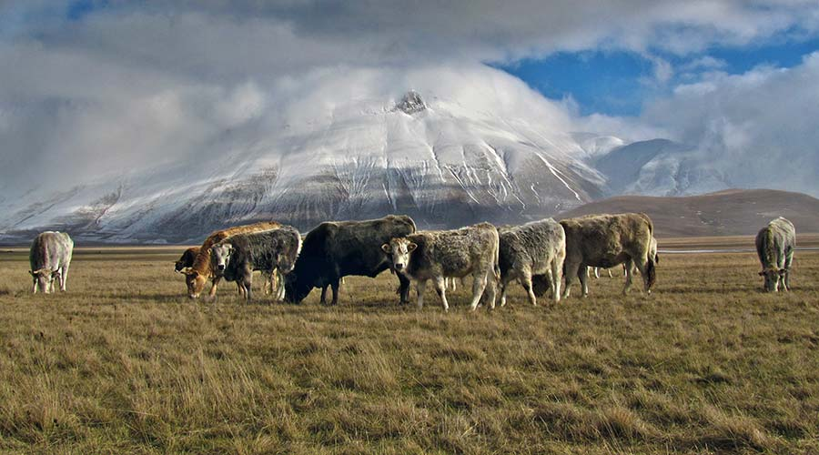 cows-mountain_marco-forno-144613-unsplash